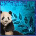 camelia909